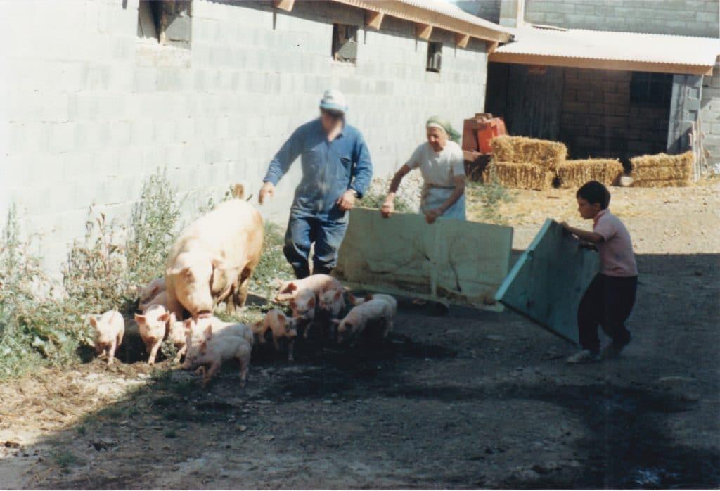Cochon Truie et porcelets Salaison du Champsaur Saint Laurent du Cros Hautes Alpes Charcuterie Artisanale en ligne